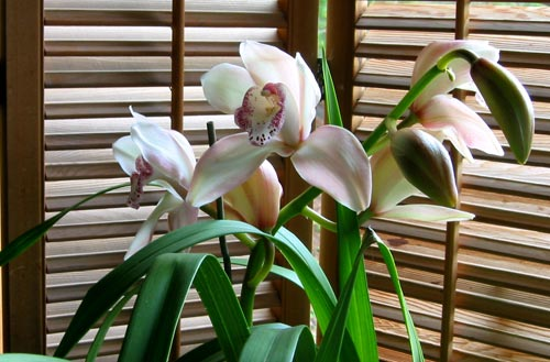 Shaded Orchids - Photographed by Annie Fox